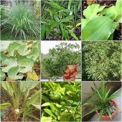 Herba Dijadikan Ubat Kanser Payudara
