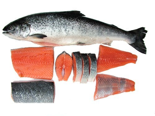 ikan salmon_ubatkanser.my